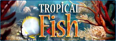 Tropical Fish 3D Screensaver