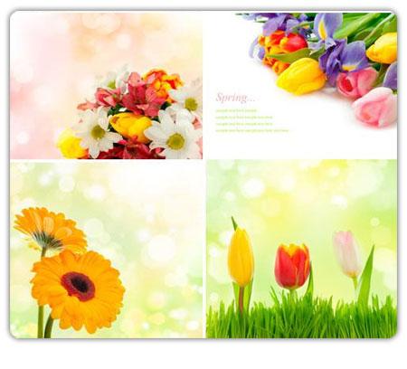 گل - استاک - Stock flower